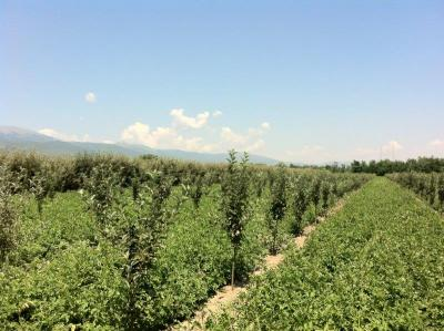 AG BIZ Macedonia – Поддршка за земјоделството во преспанскиот регион